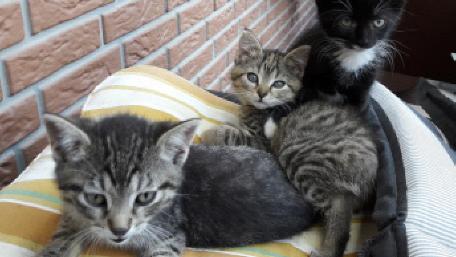 Ferienhof Morich Katzen