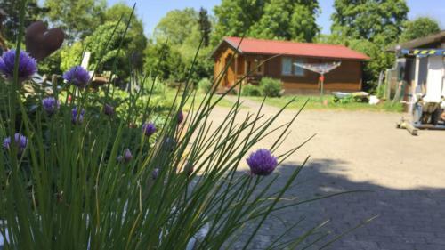 Ferienhof Morich - Garten