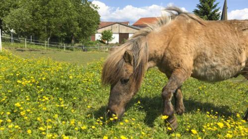 Ferienhof Morich - Ponywiese